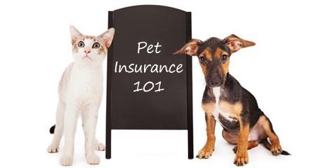 Benadryl for Pets Dosage & General Information | PetCoach