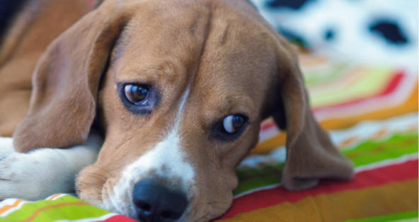 Dog Throwing Up At Night Only | PetCoach