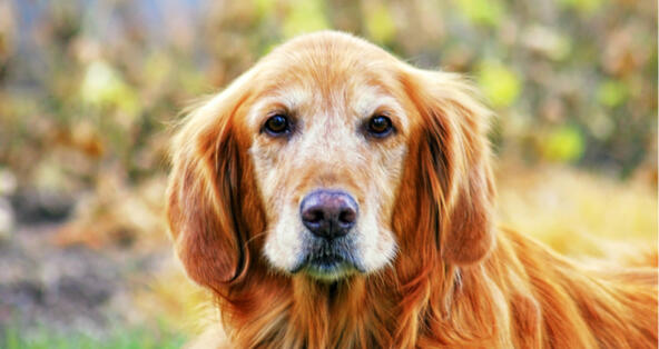Why Doesn't My Dog Like His Lower Back Touched? | PetCoach