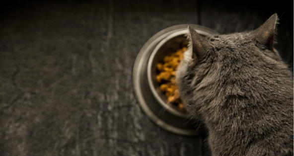 Is Royal Canin Urinary SO Cat Food Good for Cats? | PetCoach