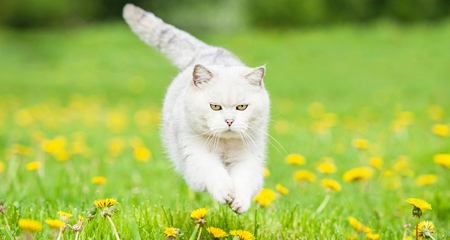 Praziquantel in Vet Medicine - Facts and Information | PetCoach