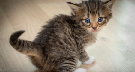 Everything You Should Know About Pet Vaccines | PetCoach
