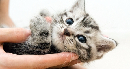 New Kitten 101: What You Need to Consider | PetCoach