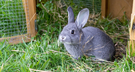 Red Urine in Rabbits: Causes, Diagnosis, and Treatment ...