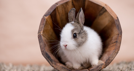 Head Tilt (Wry Neck) in Rabbits: Causes & Treatment | PetCoach