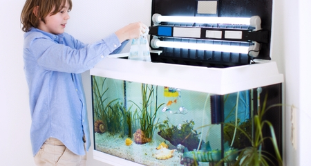 How to Choose the Right Tank for Your Fish | PetCoach