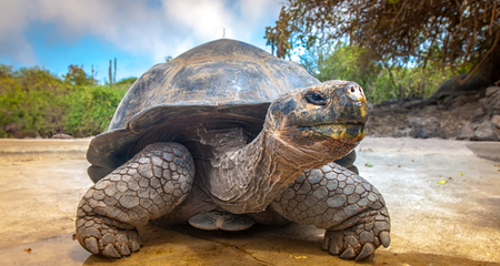 Anatomy and Diseases of Turtle and Tortoise Shells | PetCoach