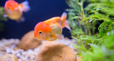 Causes, Prevention, and How to Treat Ich in Freshwater Fish