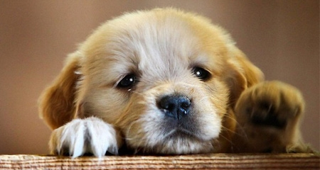 How to Care for a Newborn Litter of Puppies | PetCoach