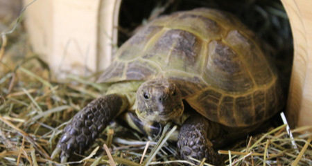How to Create the Ideal Russian Tortoise Habitat | PetCoach