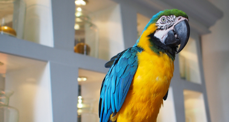 Causes of Excessive Screaming in Pet Birds and How to Reduce
