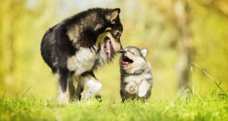 Breeding Your Dog? Here's What You Need to Know | PetCoach