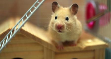 Twenty-Five Hamster Fun Facts | PetCoach