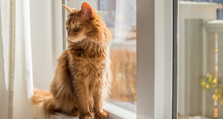 6 Diy Window Perches Your Cat Will Love Petcoach