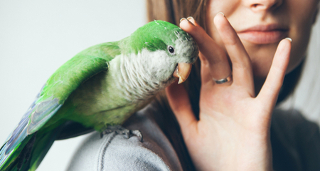 Caring For Your Senior Bird | PetCoach