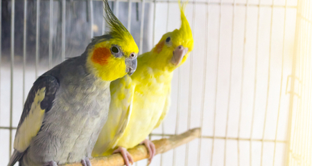 Cleaning Your Bird's Cage: Daily, Weekly, and Monthly Bird