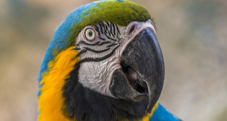 Anatomy, Care, and Diseases of Bird Beaks | PetCoach