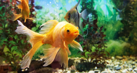 Aquarium Filter Functions and Types: Choosing the Right Kind