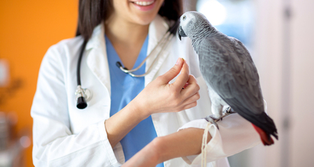 How to Identify the Symptoms of a Sick Bird | PetCoach