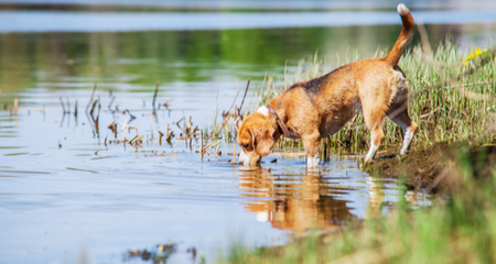 Awe Inspiring Toxic Blue Green Algae Linked To Fatalities In Dogs Petcoach Ibusinesslaw Wood Chair Design Ideas Ibusinesslaworg