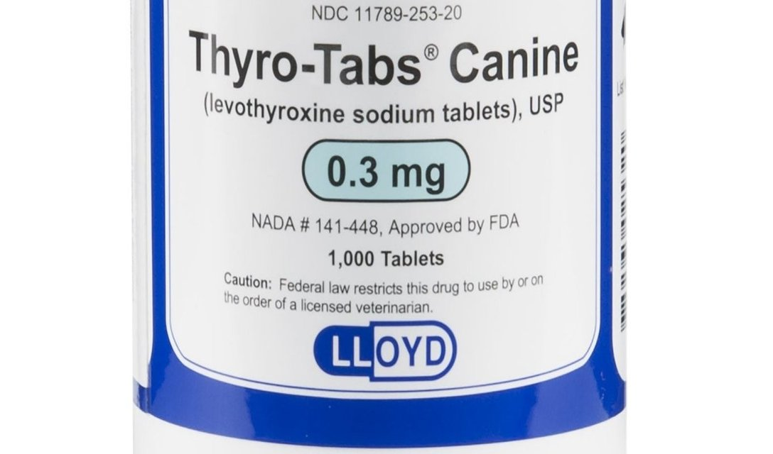 Levothyroxine In Veterinary Medicine Facts And Information